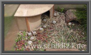 Haus für Schildkröten